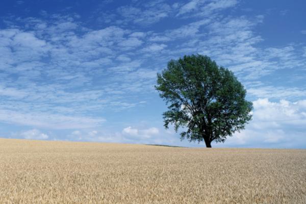 可持续发展在中国,富士可持续发展,富士CSR活动